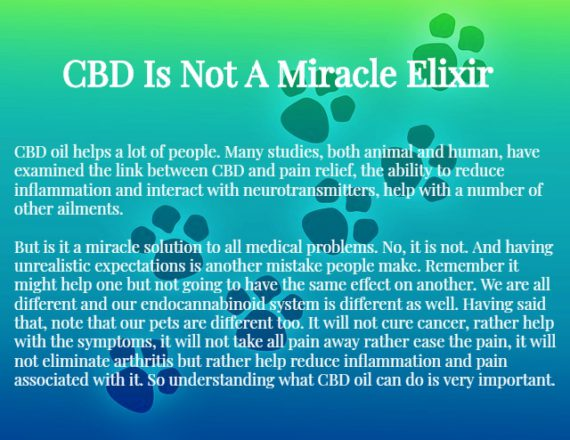 What Is CBD Oil For Dogs,what is CBD oil for cats,CBD oil for pets